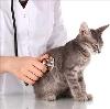Ветеринарные клиники в Ивделе